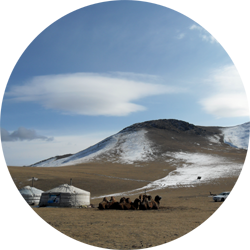 ulaanbaatar mongolia camel ger gur hut asia travel desert